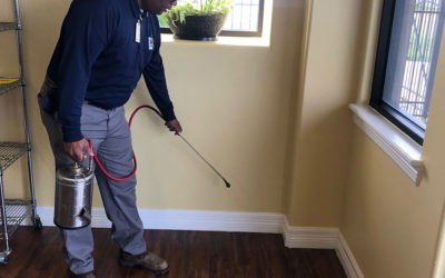 Tips to Keep the Pests from Invading your Home This Winter