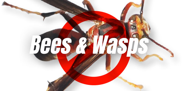 Prevent wasps in your home or business