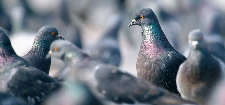 A Complete Guide to Bird Pest Control