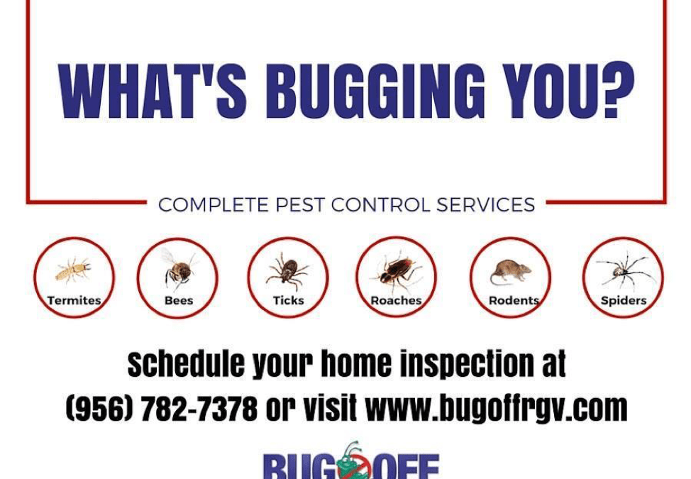 Top Reasons to Hire a Pest Control Service Provider