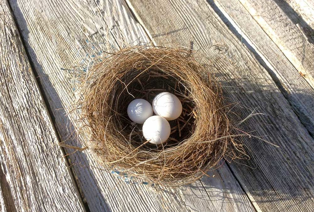 The Dos and Don'ts of Bird Nest Removal