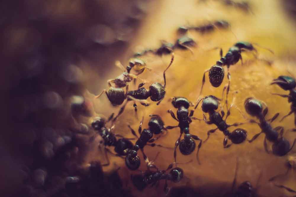 Tips on How To Keep Your Commercial Property Pest Free