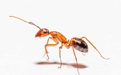 New Habits You Can Do to Avoid Pests at Home