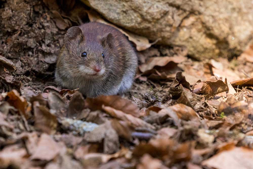 Things You Didn't Know Are Attracting Rats to Your Home