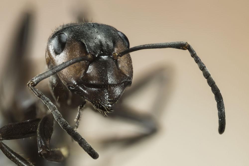 Pest Control Myths You Should Never Believe