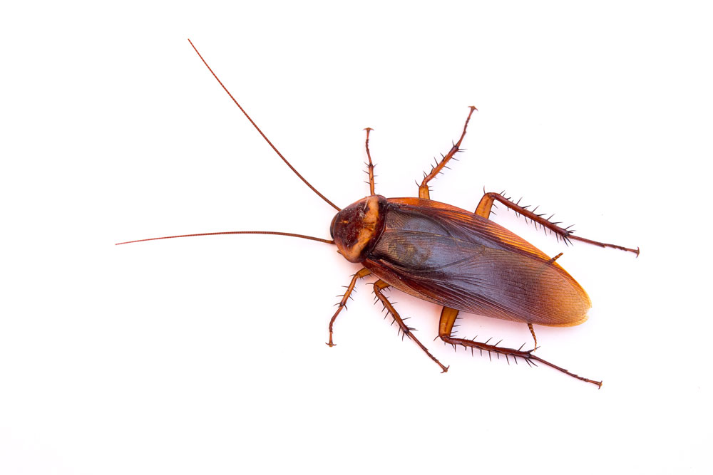 Habits That Attract Pests